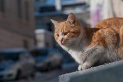 Nahes hohes der Katze Stockfoto