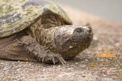 Nahes hohes der Schildkröte Lizenzfreie Stockfotos