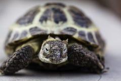 Nahes hohes der Schildkröte Lizenzfreie Stockbilder