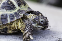 Nahes hohes der Schildkröte Lizenzfreies Stockfoto