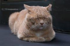 Nahes hohes der Schlafenkatze Stockfoto