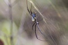 Nahes hohes der Spinne lizenzfreie stockfotografie