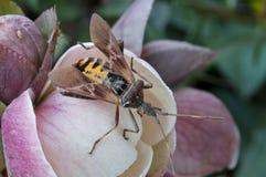 Nahes hohes des Insekts Lizenzfreie Stockbilder