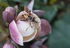 Nahes hohes des Insekts Lizenzfreies Stockfoto
