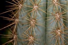 Nahes hohes des Kaktus stockfotos