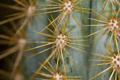 Nahes hohes des Kaktus lizenzfreie stockfotos