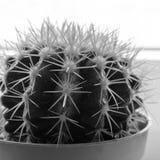 Nahes hohes des Kaktus Anlage im Haus lizenzfreie stockbilder