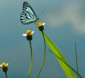 Nahes hohes des Schmetterlinges Lizenzfreies Stockbild