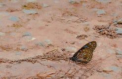 Nahes hohes des Schmetterlinges Lizenzfreie Stockfotos