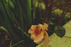 Nahes hohes Foto einer Blume stockbild