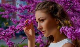 Nahes hohes Porträt der jungen Schönheit mit dem braunen Haar in den weißen Kleiderhaltungen elegant im Blütenrosa Judasbaum lizenzfreies stockbild