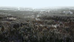 NAHES HOHES von der Luftfliegen über gefrorenen Treetops im schneebedeckten Mischwald bei nebelhaftem Sonnenaufgang Goldene Sonne stock video
