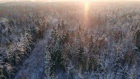 NAHES HOHES von der Luftfliegen über gefrorenen Treetops im schneebedeckten Mischwald bei nebelhaftem Sonnenaufgang Goldene Sonne stock video footage
