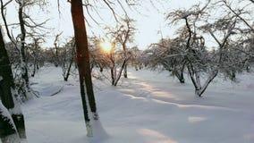 NAHES HOHES von der Luftfliegen über gefrorenen Treetops im schneebedeckten Mischwald bei nebelhaftem Sonnenaufgang Goldene Sonne stock footage