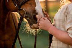nahes Porträtmädchen und -pferd auf dem Gebiet im Bauernhof auf Sonnenuntergang Wald auf Hintergrund stockbilder