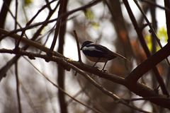 Nahes Treffen mit nettem und kleinem Vogel lizenzfreie stockfotos