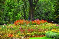 Nahm Schuss vom botanischen Garten in ooty stockbild
