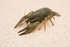 Nahrung Live Crayfish auf einer Marmortabelle lizenzfreie stockfotografie