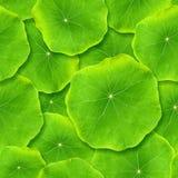 Nahtlos grüne Blätter. Lizenzfreie Stockfotografie