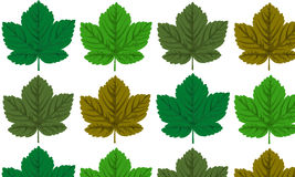 Nahtlos mit Ahornblättern Stockbilder