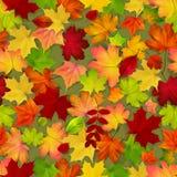 Nahtlos mit den roten und gelben Herbstblättern stock abbildung