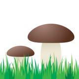 Nahtloser Pilz im Gras. Stockfoto