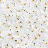 Nahtlose Beschaffenheit der weißen Orchidee Lizenzfreie Stockfotos
