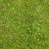 Nahtlose Beschaffenheit des grünen Grases lizenzfreies stockbild