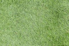 Nahtlose Beschaffenheit des grünen Grases Nahtlos nur in den horizontalen dimens Stockbilder