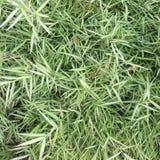 Nahtlose Beschaffenheit des grünen Grases Nahtlos nur im horizontalen Maß Stockfotografie