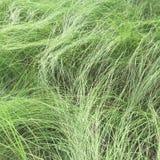 Nahtlose Beschaffenheit des grünen Grases Nahtlos nur im horizontalen Maß Lizenzfreie Stockbilder