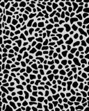 Nahtlose Beschaffenheit des Leoparden Stockbild