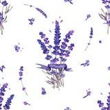 Nahtlose Beschaffenheit mit Blumensträußen des Lavendels In den lila Farben lizenzfreies stockbild