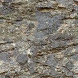 Nahtlose Beschaffenheit - natürlicher rauer Stein stockbilder