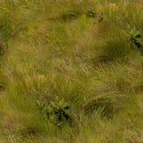 Nahtlose Beschaffenheit von Grasländern Stockfoto