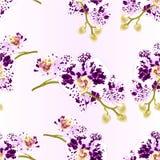 Nahtlose Beschaffenheitsstammorchideen blüht beschmutzte botanische Illustration des purpurroten und weißen Weinlesevektors des P Stockfoto