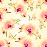 Nahtlose Beschaffenheitsstammorchideen blüht botanische Illustration des gelben Weinlesevektors des Phalaenopsis tropische Betrie Lizenzfreie Stockfotos