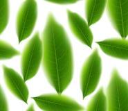 Nahtlose Bewegung der grünen Teeblätter an mit Hintergrund Stockbild