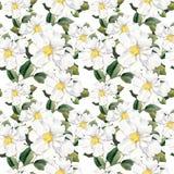Nahtlose Blumentapete mit weißen Blumen Magnolie, Pfingstrosen watercolour stock abbildung