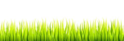 Nahtlose Frühlingsgraslinien für die Einfassung, Seitenende und Dekorationen Frühjahrsprösslinge wächst in einem Tageslicht lizenzfreie abbildung