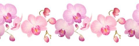 Nahtlose Grenze des Aquarells mit Orchideen Lizenzfreie Stockfotos