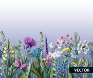 Nahtlose Grenze von wilden Blumen Auch im corel abgehobenen Betrag Lizenzfreie Stockbilder