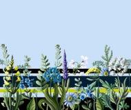 Nahtlose Grenze von wilden Blumen Auch im corel abgehobenen Betrag Stockfotografie