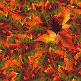 Nahtlose Hintergrundmusterbeschaffenheit gemacht von den Ahornblättern Lizenzfreie Stockbilder