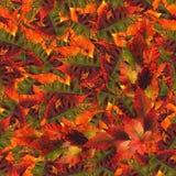 Nahtlose Hintergrundmusterbeschaffenheit gemacht von den Ahornblättern Stockfotografie