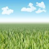 Nahtlose horizontale Fliese des grünen Grases und Himmel gestalten landschaftlich Stockfotos