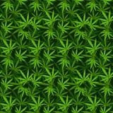 Nahtlose Muster des Marihuanahintergrund-Vektors Stockfotos