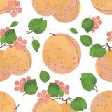 Nahtlose Musteraprikose mit Blumen Stockfoto