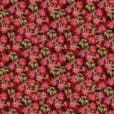 Nahtlose Musteraquarellillustration, gelocktes Rot blüht Klematis auf Rotweinhintergrund vektor abbildung