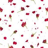 Nahtlose Rosen und Blumenblätter im Rot Stockbild